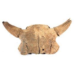 Fossilized Montana Occidentalis Skull