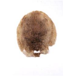 Tanned Montana Beaver Pelt