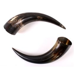 Pair of Large Cow Horns