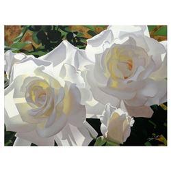 White Radiant Roses by Davis, Brian