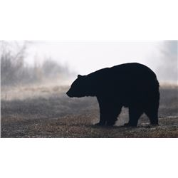 New Brunswick, Canada - 1 Hunter for 5-Day Hunt for Black Bear