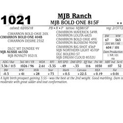 MJB BOLD ONE 815F