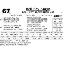 Bell Key Sagebrush 488