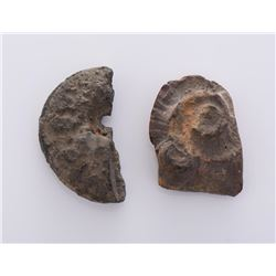 Two Stone Fossils