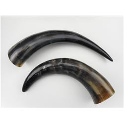 REAL COW HORNS FOR BLACK POWDER HORNS