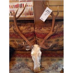 RED STAG/EUROPEAN MOUNT