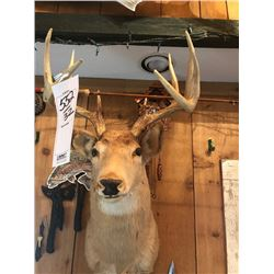 WHITETAIL DEER/SHOULDER MOUNT