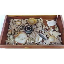 Collection of Hohokam Shell Artifacts