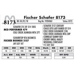 8173 - Fischer Schafer 8173
