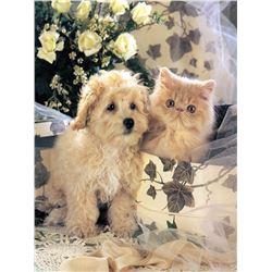 Puppy & Kitten Ceramic Art Tile