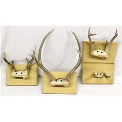 4 Deer Antler Mounts