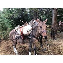Broken Hart Ranch - Elk - Montana