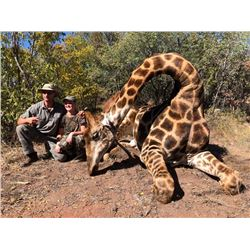 Chacma Hunting Safaris - Giraffe - South Africa