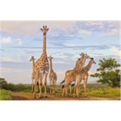 Zulu Nyala - Photo Safari South Africa