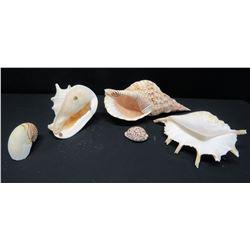 Qty 5 Misc. Natural Seashells