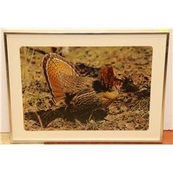 LARGE MATTED AND FRAMED TURKEY PRINT