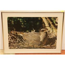 LARGE MATTED FRAMED PHEASANT PRINT