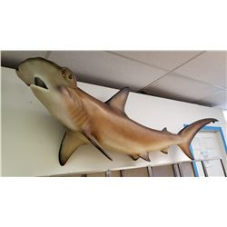Large  Hammer Head Shark
