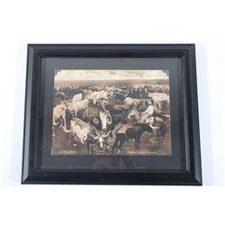 Texas Long Horns Photograph Print By W S Prettyman