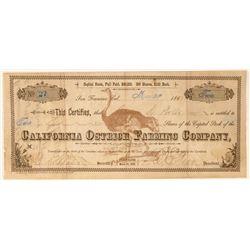 California Ostrich Farming Company Stock Certificate  (100786)
