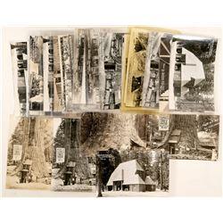 Redwood Highway Buildings RPC Postcards  (90773)
