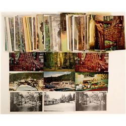 Santa Cruz, CA Big Trees Postcards  (102691)
