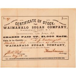 Waimanalo Sugar Company Stock Certificate issued to AJ Cartwright, Father of Baseball  (101561)