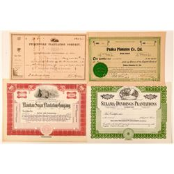 Four Hawaii Sugar & Rice Plantation Stock Certificates  (101519)