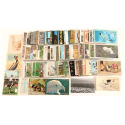 Bird Postcard Collection  (102658)