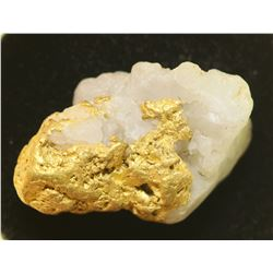 Gold Nugget in Quartz  (104146)