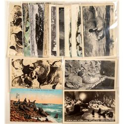 Seals & Sea Lions Postcards Chromolitho's & RPC's  (91326)