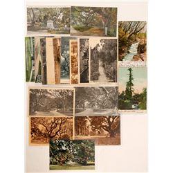 UC Berkeley Garden Postcards  (90783)
