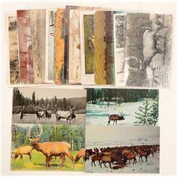 Elk Postcards  (91327)