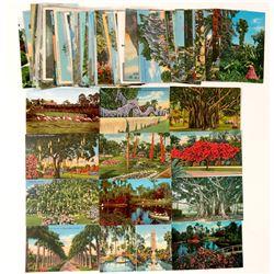 Cypress Gardens Florida Post Card Collection  (91194)