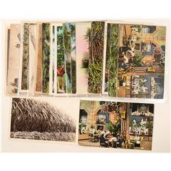Hawaii, Sugar Pineapple & Coconut (Postcards)  (91203)