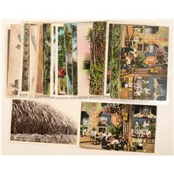 Hawaii, Sugar Pineapple & Coconut (Postcards)  (91203)