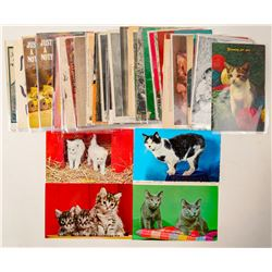 Cats, Lion and Tiger Postcards  (102673)