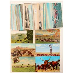 Cattle Postcards  (102675)