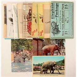 Dinosaurs and Elephant Postcards  (102715)