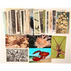 Fish and Aquatic Life Postcards  (102669)