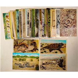 Monkey, Reptile and Zoo Postcards  (102719)