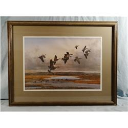 Bob Elgas print, Canadian Geese over water, Artist proof, signed , 20w x 14h