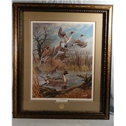 Harold Roe, Pintail Majesty, 922/4000 signed, DU 75th Anniversary Artist, 18w X 22H