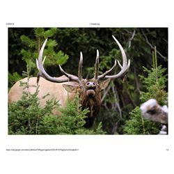 Trophy Bull Elk or Trophy Mule Deer or Coues white tailed Deer in New Mexico:Winning Bidders Choice