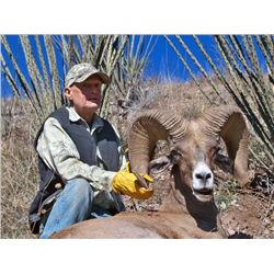 Desert Bighorn Sheep hunt in Sonora Mexico, 8 day (6 days hunting). This hunt is for one hunter and