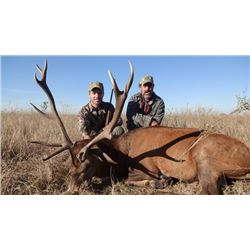 5-day Red Stag Hunt in Argentina for 1-Hunter for 2020