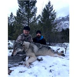 British Columbia Wolf Hunt for 2 Wolves