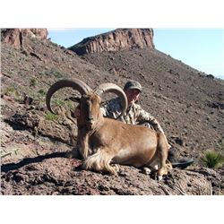"Free-Range Aoudad ""Barbary"" Sheep Hunt"