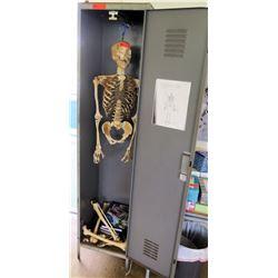 Model Human Skeleton and Metal Locker (RM-221)