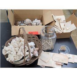 Misc. Shells, Coral, Shells w/ Labels (RM-122)